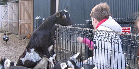DSPCA Easter 4 Day Education Animal Care Camp - 1st-6th Class National School Kids tickets