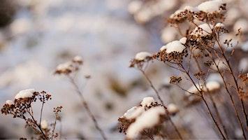 Sisira - Später Winter | Ayurvedische Jahreszeiten Vortragsreihe