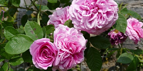 SPECIALIST TOUR: The Rose Garden tickets
