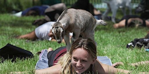 Fredericksburg Goat Festival
