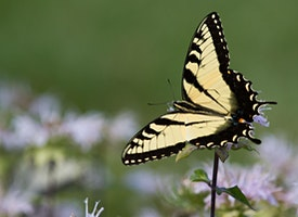 Amazing World of Pollinators in Shenandoah National Park Seminar