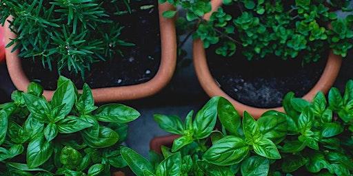 Herbs for Spring Rejuvenation