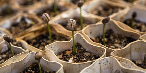 Seed Starting for Kids