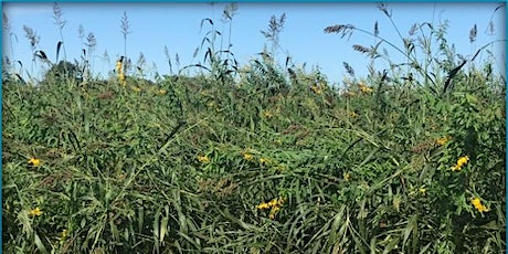 Green America's Joint Network Meeting Summer 2020: Regenerative Supply Working Group and Carbon Farming Innovation Network tickets