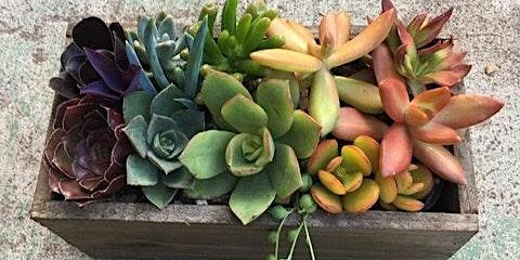 Succulent  Workshop at Sol Grill