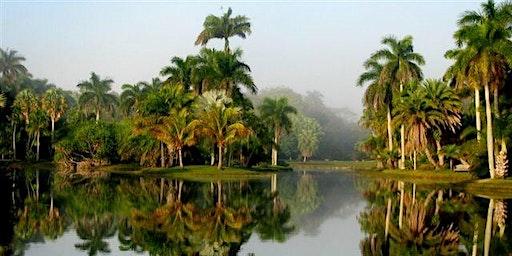 Palm Care Made Simple