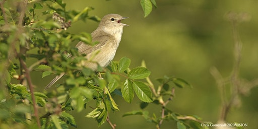 Spring Bird Identification (additional date)
