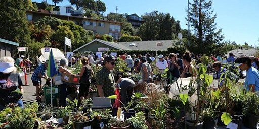 13th Annual Plant Exchange
