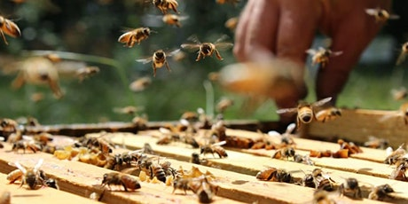 Beekeeping 101 (BYOB) tickets