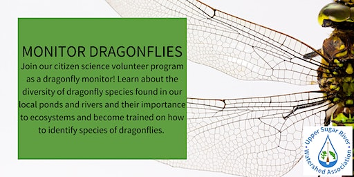 Become a Trained Dragonfly Monitor