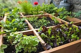 For The Love of Gardening- Raised Bed/Square Foot Gardening