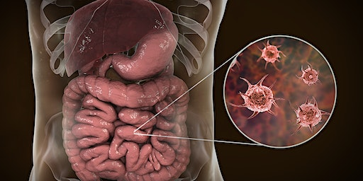 Getting to the Root Cause of Crohn's, Colitis, IBS, and other Chronic Diges