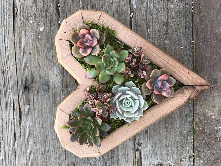 Vertical Succulent Garden Make N Take Workshop. image