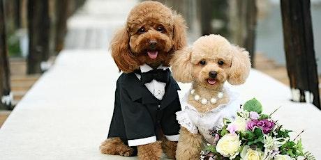Holiday Inn, Peterborough Wedding Show tickets