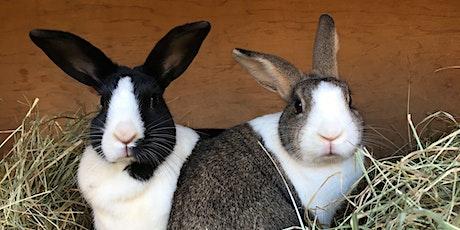 Rabbit RVHD2 Vaccination Day tickets