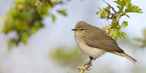 Spring bird ID at Lackford Lakes (EWC 2806)