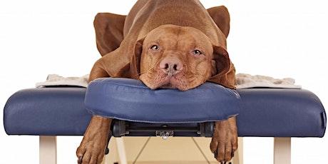Massage, body en balance: Maak van jouw hond een fitte senior tickets