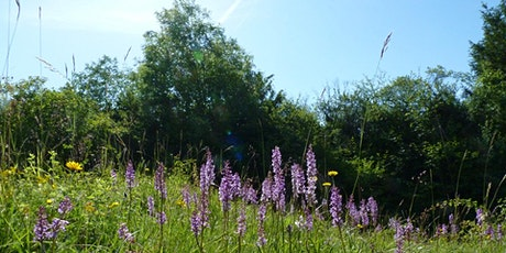 The orchids, flowers and butterflies of Aston Clinton Ragpits - guided walk tickets