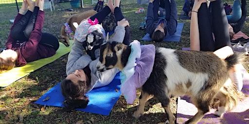 Baby Goat Yoga - Friday, February 21st @ 6 PM