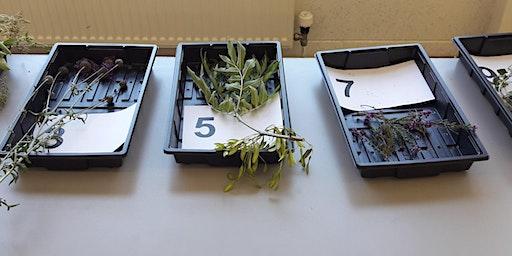 FREE Botany Assessment Day for 18-35s