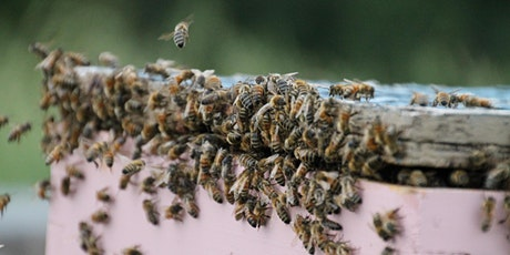 United Beekeepers of Alberta Conference and AGM tickets