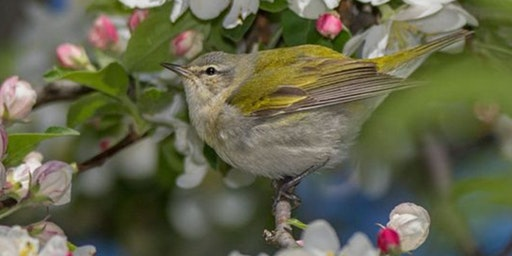PHOTOGRAPHING SPRING'S BEST BIRDS, BLOOMS, & BEASTS (free)