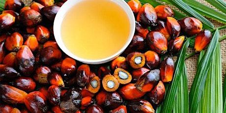 Améliorer la durabilité de la filière huile de palme ivoirienne, enjeux billets