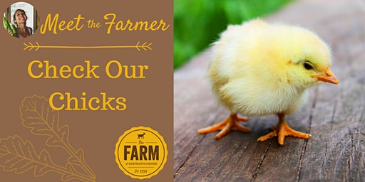 Meet the Farmer: Check Our Chicks