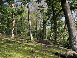 Forest Bathing experience - a Spring Equinox treat!