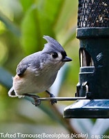 Discover the Birds in Your Backyard -  Saturday 2/29 - 11:30 am - at the PLANT FESTIVAL TODAY!!!