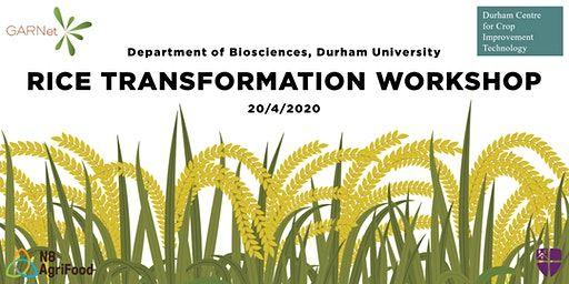 Genetics Society Arabidopsis Meeting: RICE TRANSFORMATION WORKSHOP