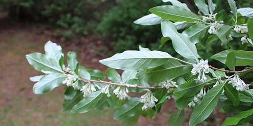 Invasive Plant Workshop - Fall (Ivy Creek Natural Area)