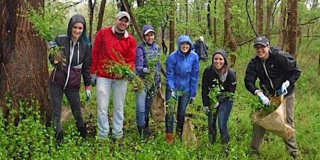 Invasive Plant Removal Drop In - May 14 tickets