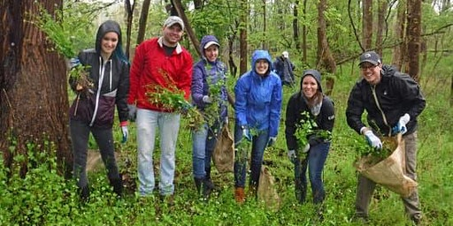 Invasive Plant Removal Drop In - May 28