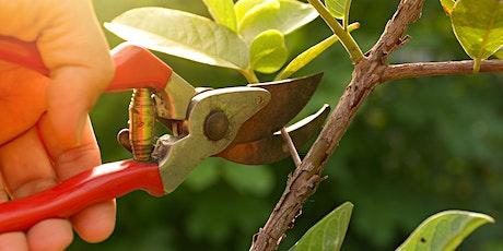 Free pruning Workshop tickets
