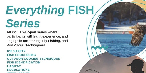 Everything Fish Series