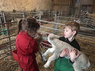 Lambing Live at Druid Temple Farm tickets