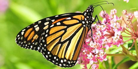 Saving the Monarchy: One Milkweed at a Time tickets