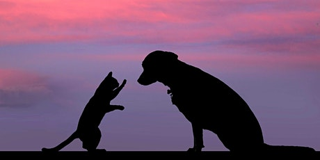 How to Deal with the Loss of a Pet with meditation tickets