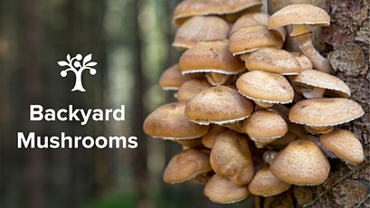 Backyard Mushrooms - Virtual Class! tickets