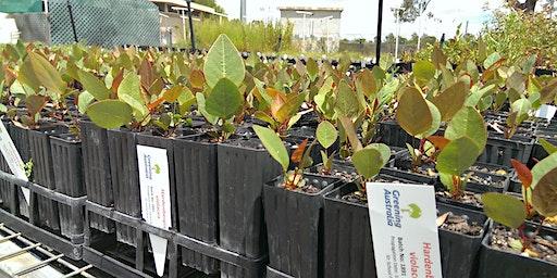 Greening Australia Community Thinning event
