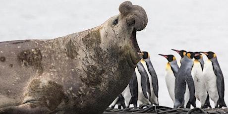 Antarctic, South Georgia & the Falkland Islands information evening tickets