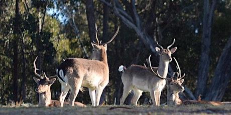 Nillumbik Deer Information Session tickets