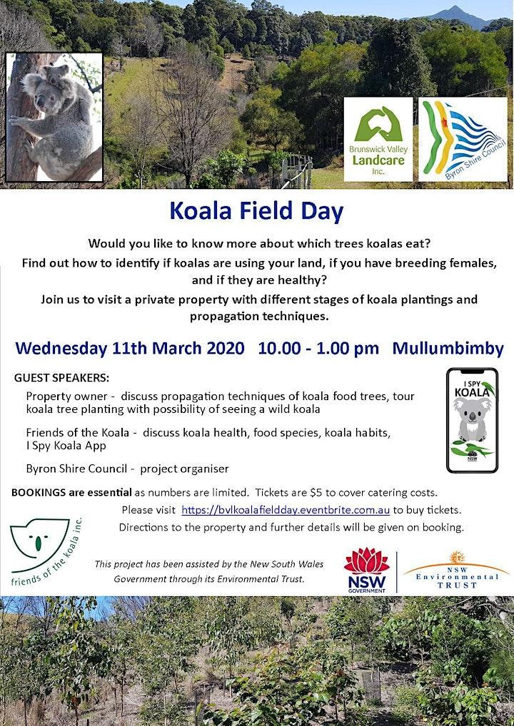 Koala Field Day image