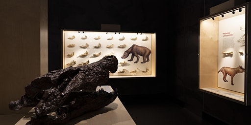 Curator Talk | Treasures from the field: Alcoota Fossils