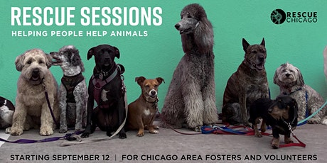 Rescue Sessions: Canine Communication tickets