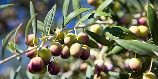 American Olive Oil Producers Association Annual Meeting