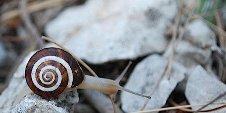 Formation - Action : accueillir la petite faune locale dans son jardin billets