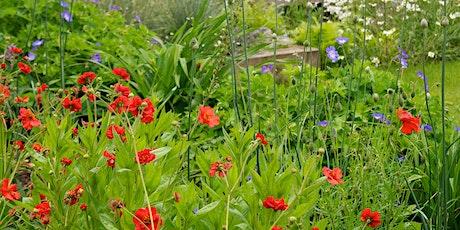 Fiona's one-day workshop: Your DREAM GARDEN emerges using mindful gardening tickets