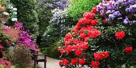 Trewithen Head Gardener's Spring Breakfast and Tour tickets